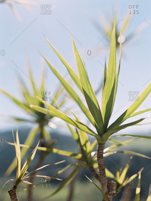 Close-up of a plant with green spiky leaves