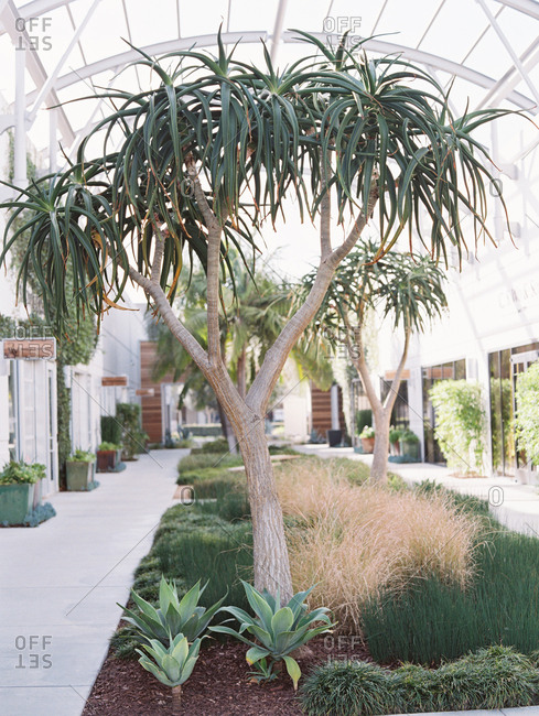 Landscaping between pathways at an indoor courtyard