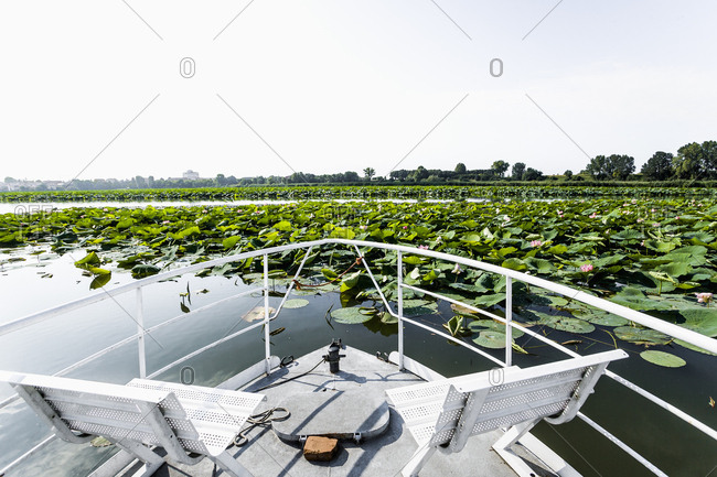 Italy, Lombardy, Mantua . Lago (lake) Superiore, A boat near the floating island of the Lotus flowers