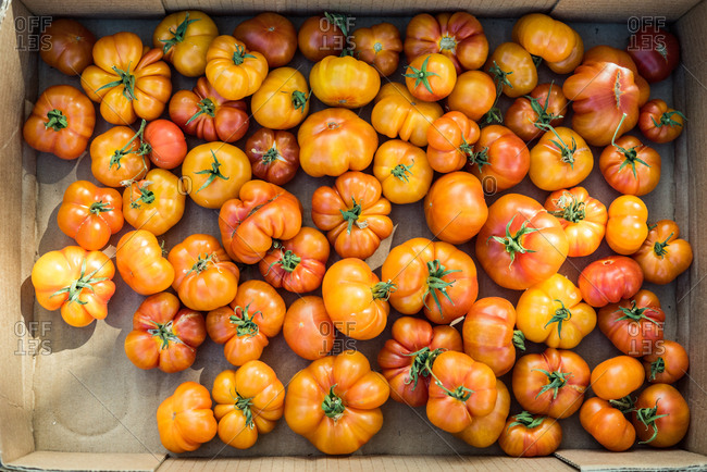 Overhead view of a box of heirloom tomatoes