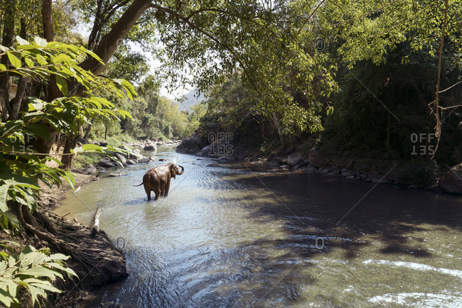 Elephant bathing in river at forest