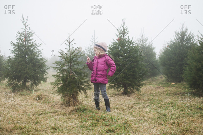 Girl looking at pine tree while standing in farm during foggy weather