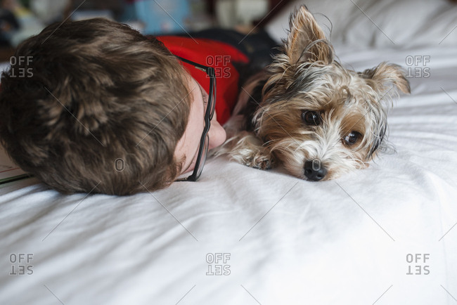 Close-up of boy lying on bed with Yorkshire Terrier