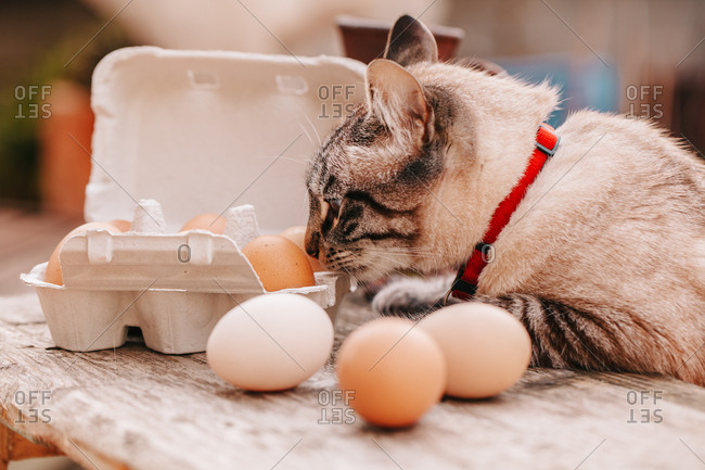 Cat playing with eggs on a wooden table