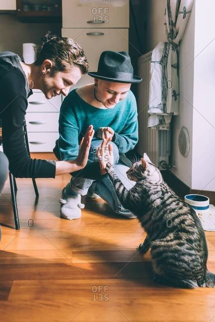 Two young female friends high fiving cat in kitchen