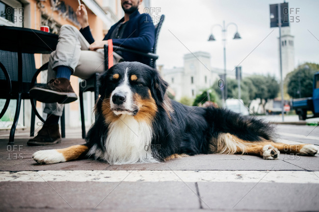 Portrait of dog lying down waiting at sidewalk cafe
