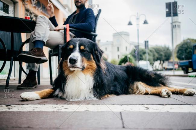 Portrait of dog lying down waiting at sidewalk cafe