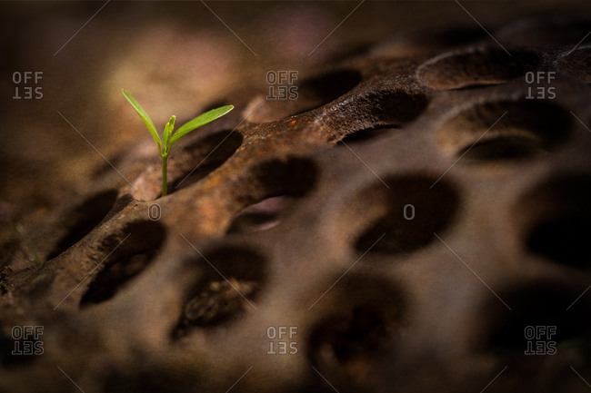 Close-up of plant sprouting through hole