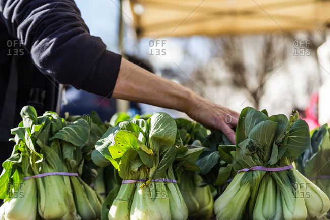 Person by bok choy in market
