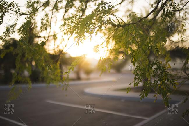 Tree branch by sunlit parking lot
