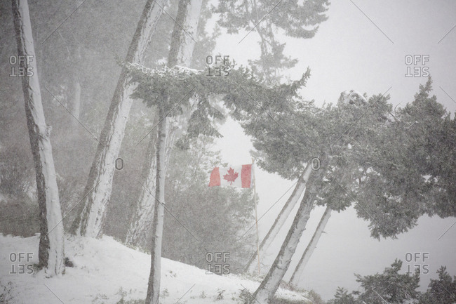 Canadian flag in a snowstorm