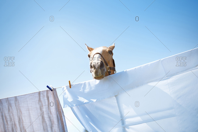 Head of horse above the rope with drying clothes