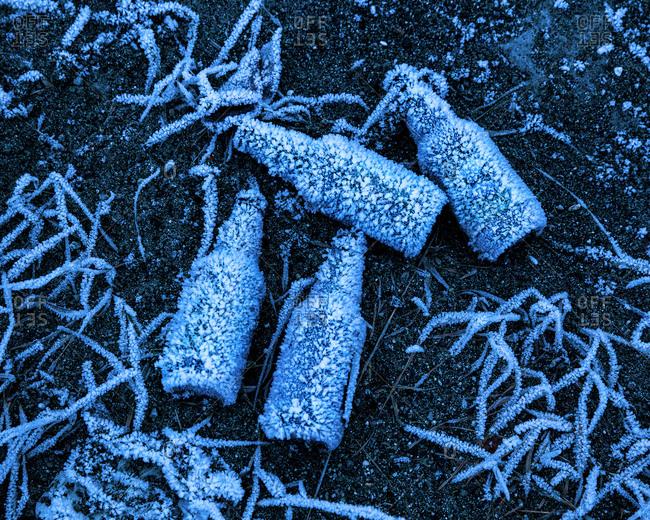Beer bottles covered in forest