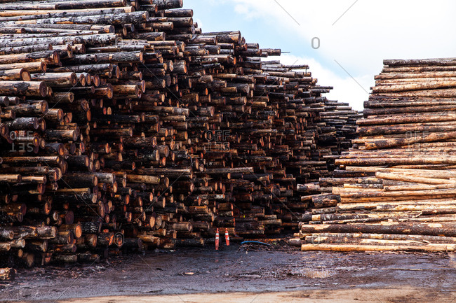 Stacks of cut down trees