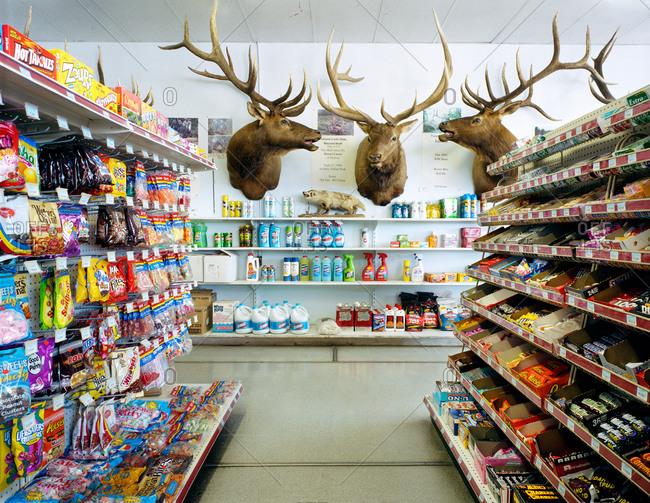 5/19/06: Elk heads in a convenience store