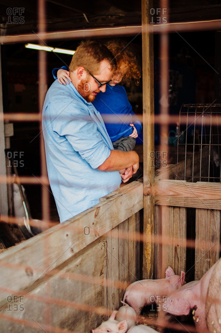 Father and son looking at pigs at a county fair