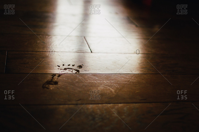 Single wet footprint on a wooden floor in sunlight