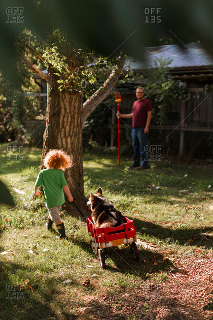 Little boy pulling his dog in a wagon