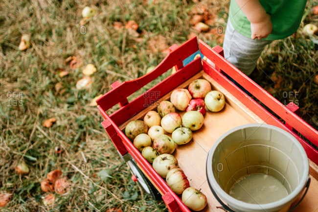 Boy standing next to a wagon with apples in it