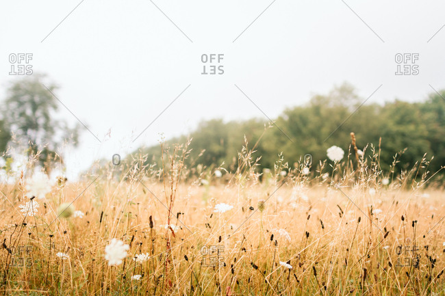 Tall grass and wildflowers in a field
