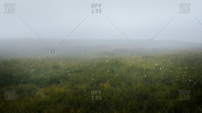 Flowers blooming in foggy meadow, Wales
