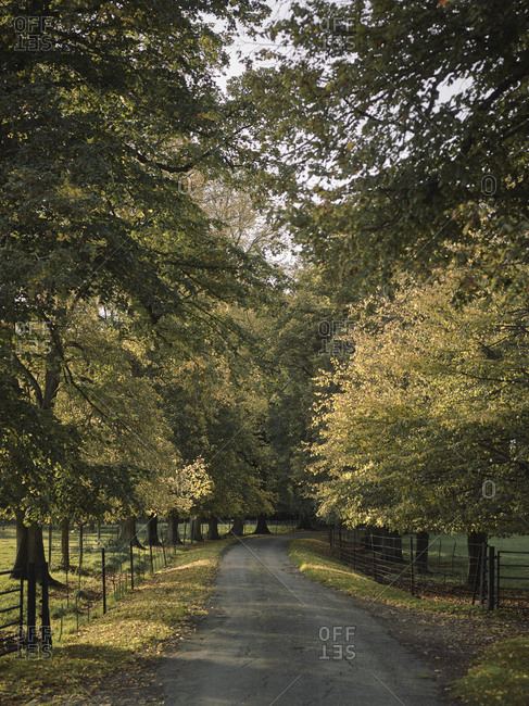 Tree-lined country road in autumn