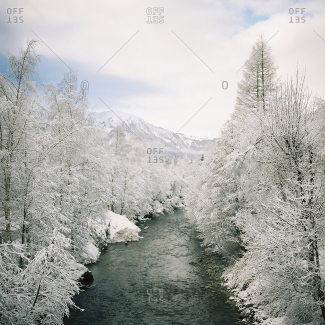 River lined by snow-covered trees in mountain wilderness