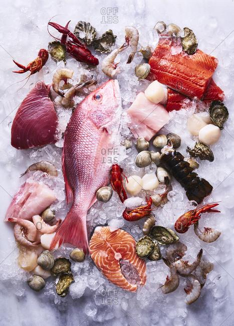 Variety of seafood on ice