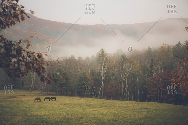 Horses in a field by a foggy mountain