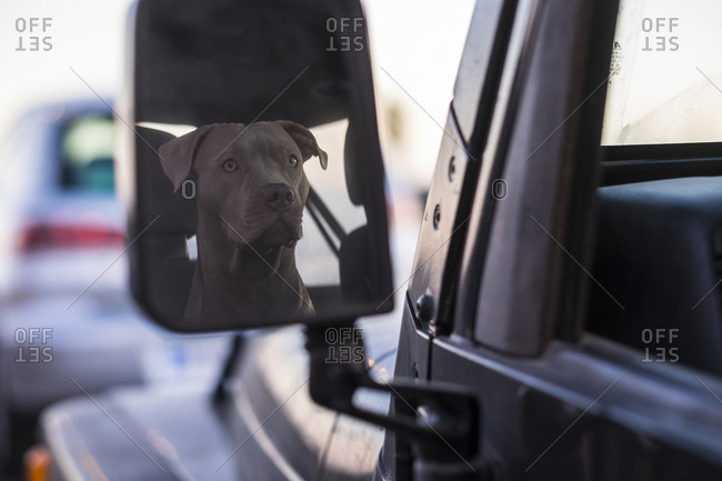 Dog reflected in car's mirror