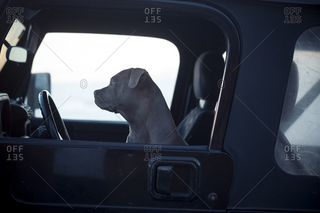 Dog in a vehicle's front seat