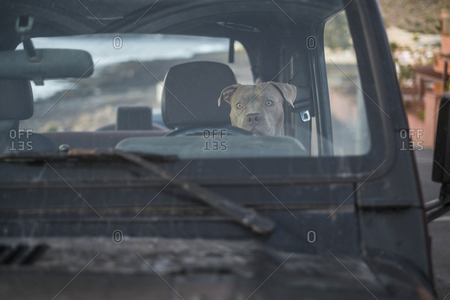 Dog looking out front car window