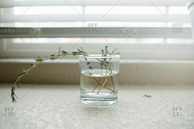 Herbs in glass of water on kitchen counter