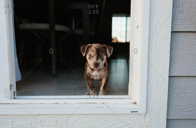 Small spotted puppy in doorway