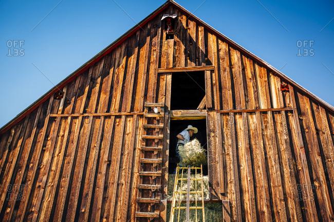 Caucasian farmer in barn lifting bale of hay