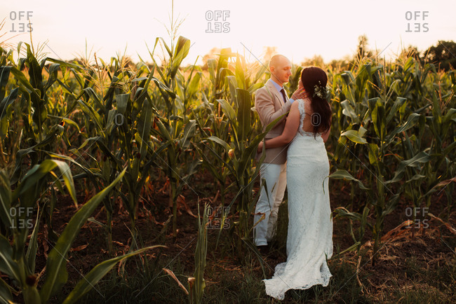 Bride and groom embraced in a cornfield