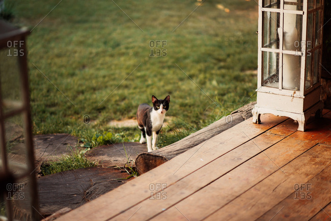 Black and white kitten walking onto a wooden porch