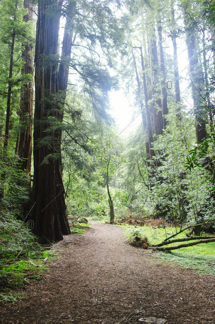 Quiet moment on walk through Muir Woods National Monument