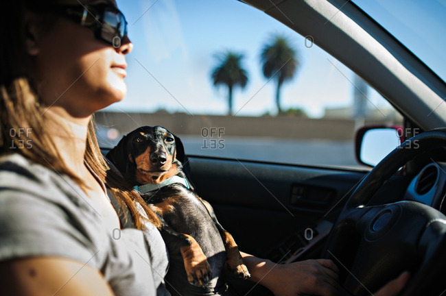 Woman drives with dog on her lap