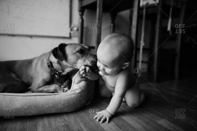 Dog licking baby's cheek
