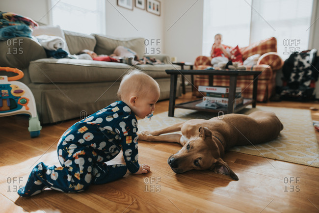 Baby crawling on floor by dog