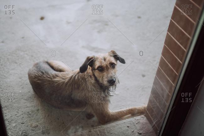 Scruffy dog waiting outside glass window