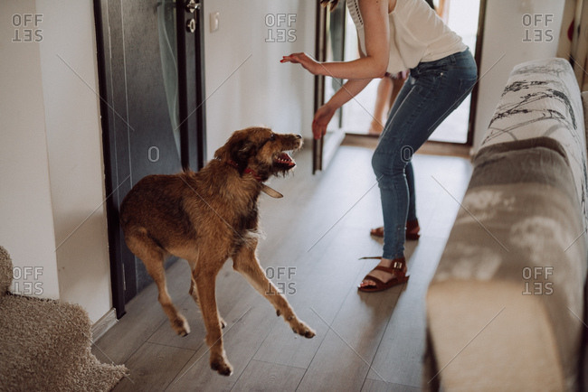 Woman playing with her dog indoors