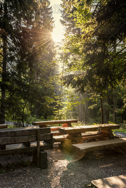 Czech- Hradec Kralove- rest area and forest in Giant Mountains National Park