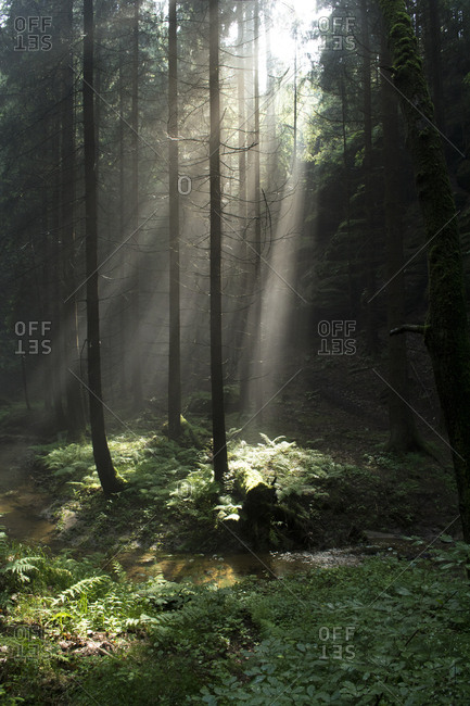 Germany- Saxony- Elbe Sandstone Mountains- Sun rays in the forest