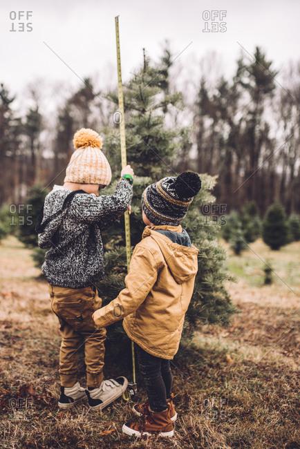 Sibling boys measuring a Christmas tree