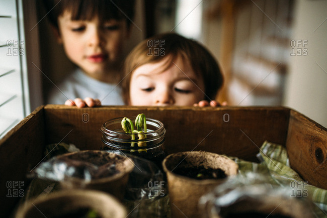 Two boys peeking into wooden box with young plants