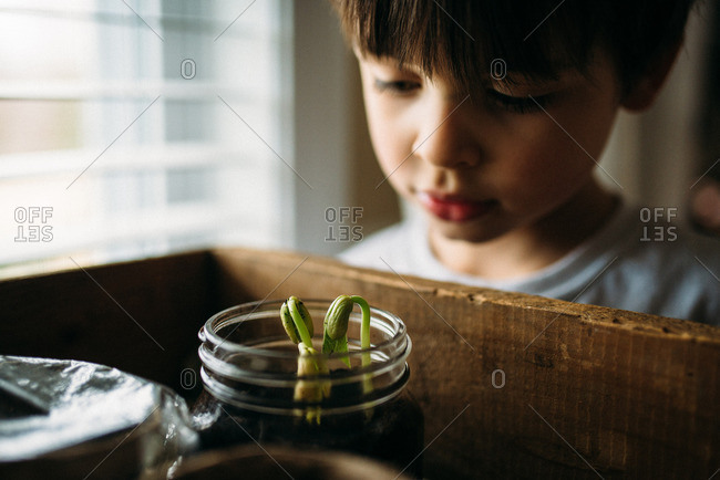 Boy looking into wooden box with young plants