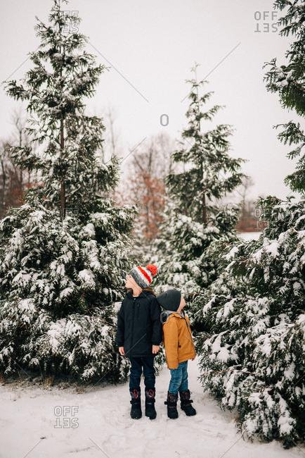 Two boys looking up at snowy trees