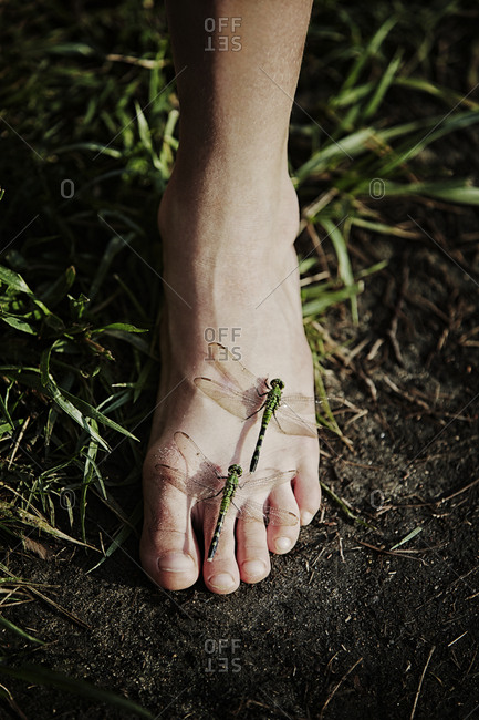 Dragonflies on foot